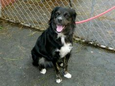 Manhattan NY.  Sergio.  Male.  15 mths.  Dies in a.m.  See Urgent Part 2 on fb.***RESCUED***