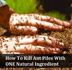 How To Kill Ant Piles With One Natural Ingredient