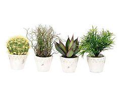 4 Pots GREEN, céramique - blanc et vert