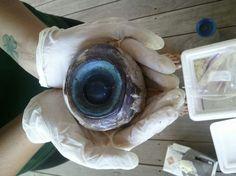 Giant 'mystery eyeball' discovered on South Florida beach