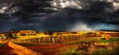 Google Image Result for http://australiantraveller.com/images/galleries/5035/058.-Pindarie-Winery-Barossa-Valley---Dragan-Radojac.jpg