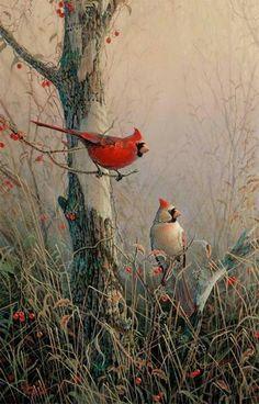 Cardinals...Sam Timm