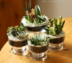 succulents in bowls