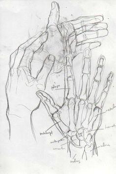 hands, beautiful hands