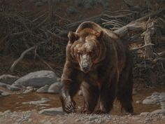 Greg Beecham :: Force of Nature at Astoria Fine Art Gallery in Jackson Hole Bear Paintings, Wildlife Paintings, Wildlife Art, West Art, Animal Totems, Animal Drawings, Horse Drawings, Fine Art Gallery, Brown Bear