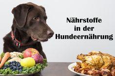 Hier kannst du lesen, welche Nährstoffe Hunde brauchen. Welche gibt es und welche sind wichtig in der Ernährung von Hunden?