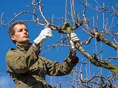Řez ovocných stromů je náročná disciplína Garden, Garten, Lawn And Garden, Gardening, Outdoor, Gardens, Tuin