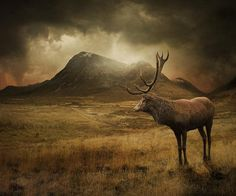 ~My heart's in the Highlands, my heart is not here,  My heart's in the Highlands, a-chasing the deer;  Chasing the wild-deer, and following the roe,  My heart's in the Highlands, wherever I go.    Robert Burns~