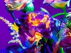 Electric Blossom' still life photography by Torkil Gudnason
