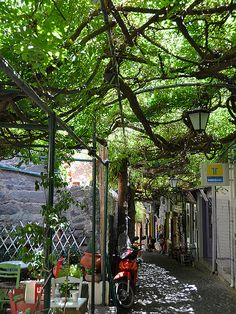 Wisteria covered streets of Molyvos