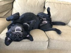 Stop taking a picture and rub my belly. http://ift.tt/2kdtx7z
