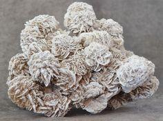 Selenite Desert Rose, Samalayuca, Chihuahua, Mexico 5 lb 1 oz Specimen