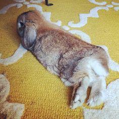 Wabbit feet! #hehateswhenitouchhisfeet  #rabbitfeet #bunny #bunbun #bunniesofinstagram #latke #lovehim #LBjewelry #cute #jewelry