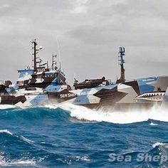 Sea Shepherd prepares for second mission targeting toothfish poachers in Antarctic waters