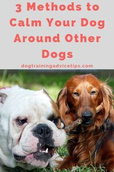 Funny Dog Toys 3 Methods to Calm Your Dog Around Other Dogs. Dog Toys 3 Methods to Calm Your Dog Around Other Dogs. Training Your Puppy, Dog Training Tips, Potty Training, Training Classes, Agility Training, Dog Agility, Training Academy, Training School, Toilet Training