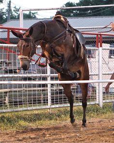 Mule jumping. Facebook, Victor McCune.