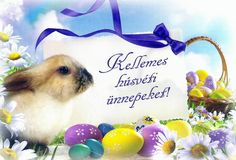 Kellemes húsvéti ünnepeket! Celebrations, Easter, Easter Activities