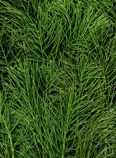 Vertical Plant Wall, Garden Landscaping, Photo Art, Herbs, Landscape, Plants, Lime, Walls, Gardens