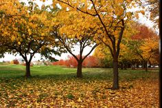 Autumn leaf carpet....here at Millbrook #millbrook #autumncolours