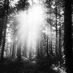 【yu_s_photographer】さんのInstagramをピンしています。 《#日本 #秋田県  #秋田 #北秋田市  #森吉山 #山  #登山 #森 #白黒 #モノクロ  #モノクローム  #japan #akita  #kitaakita #city  #moriyoshi #mountain #climbing  #woods #black #white  #monochrome》