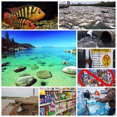 Si tuvieramos idea lo que los #productos de #limpieza que usted compra en su #tienda sercana por $1 o menos causan aparte del #ashma y otros problemas de #salud estamos destruyendo nuestro mas precioso regalo que es la #naturaleza nuestros #animales nuestras #aguas y al final del dia terminamos bebiendo esos #quimicos, #SHAKLEE #GET #CLEAN que tiene #certificaciones #governamentales como #CLIMATE #NEUTRAL en sus sifras en ingles #CLIMATICAMENTE #NEUTRAL por 0% De #CO2=#DIOXIDO DE #CARBONO