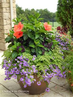 Tropical hybiscus, purple salvia, ferns, purple wave petunias and purple verbena.