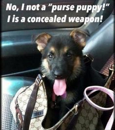 He is a concealed weapon!!!!!