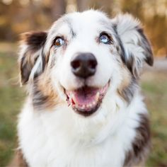 As they say, the eyes are the windows to the soul. To get a shot that really connects with the viewer, make sure your pet's eyes are in focus. If your camera has the option, use the eye-detection feature or manually select the focus point over Fluffy's eyes.