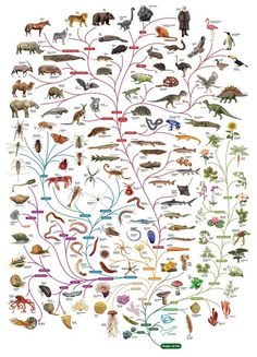 Follow evolution and explore the variety of life on the planet with the Tree of Life. - Imgur