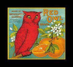 Fruit Crate Red Owl Oranges