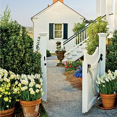This is a great way to get lots of punch from just a few dozen bulbs. You can move containers to wherever you need color on                                            a particular day, be it your front door, porch, steps, or patio. As soon as the bulbs finish blooming, plant them in the garden.                                            No bulbs are easier for container growing in the South