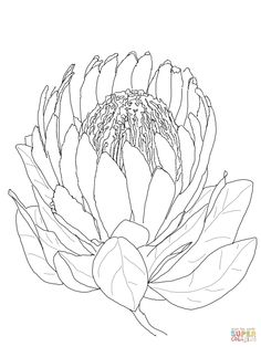Colorare Protea Flower | SuperColoring.com