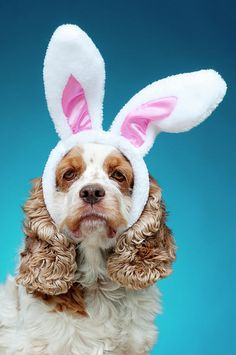 The time their dog ate their Easter baskets, foil and all. EBIT-Easter Bunny In Training Black Lab Puppies, Cute Puppies, Cute Dogs, Dog Grooming Shop, Dog Grooming Business, Funny Animal Pictures, Dog Pictures, Cute Pictures, Easter Bunny Ears