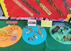 Photography tips Wild animals eyfs, Wild animals tiger, Wild animals vector, Wild animals . Math Sorting Activities, Jungle Activities, Eyfs Activities, Animal Activities, Maths, Wild Animals Videos, Wild Animals Pictures, Cute Wild Animals, Big Animals