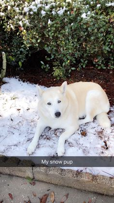 My 12 year old baby recently experienced her first snow!#dogs #kitty #lovecats #kittens #animals #ねこ #animal #kitten #cat #pets #ilovemycat #love #catoftheday #happynewyear #adorable #catlover #pet #meow #猫 #cute #pinterest