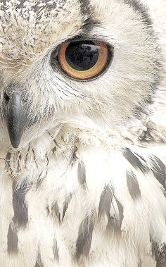Beautiful Owl close up // Gros plan