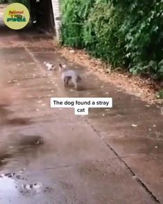 Cute Little Animals, Cute Funny Animals, Funny Dogs, Cute Cats, Big Cats, Animal Antics, Animal Memes, Animals And Pets, Wild Animals
