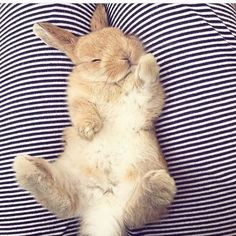 For those who are searching for a furry companion which is not just extremely cute, but very easy to keep, then look no further than a family pet bunny. Baby Animals Pictures, Cute Animal Pictures, Animals And Pets, Cute Little Animals, Cute Funny Animals, Cute Dogs, Cute Baby Bunnies, Tier Fotos, Cute Creatures