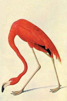 ::::ﷺ♔❥♡ ♤ ✿⊱╮☼ ☾ PINTEREST.COM christiancross ☀ قطـﮧ ⁂ ⦿ ⥾ ⦿ ⁂  ❤U◐ •♥•*⦿[†] ::::Flamingo