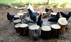 Fresh Eggs Daily®: Dust Bathing Beauties Wood Stump Dust Bath