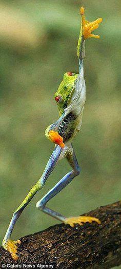 Fabulous frog is fabulous.