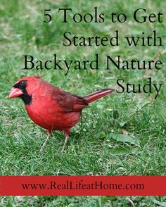 5 Tools to Help You Get Started with Backyard Nature Study