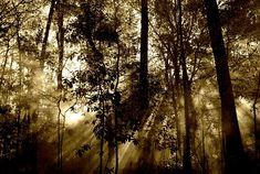 Wald, Sonne, Strahlen, Nebel, Natur, Baum, Strahl