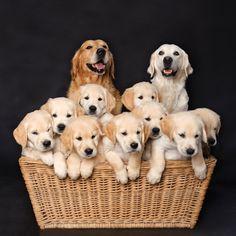 20 photos de chiennes fières de vous présenter leur progéniture
