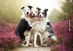Three really happy dogs.
