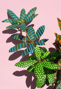 Art Design Projects: Wonderplants by Sarah Illenberger