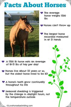 Check out these fun facts about horses! How much hay does a horse eat in a day? How does my horse know when to start shedding? You can read even more facts by clicking the pin to visit Lovehorsebackriding.com.