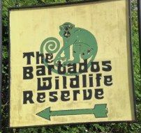 Barbados Wildlife Reserve..