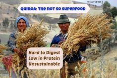 Quinoa: The Not So Superfood (low in protein, unsustainable, inflammatory and hard to digest) October 29, 2013 by Caitlin Weeks 1 Comment Quinoa: The Not So Superfood (low in protein, unsustainable, inflammatory and hard to digest)