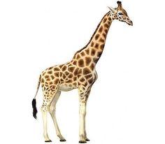 giraffe clip art giraffe clip art royalty free animal images rh pinterest com clipart giraffe face png clipart girafe